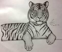 pencil drawing tiger by pluckinthaguitarra on deviantart