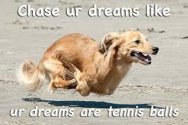 Funny Motivational Memes - dog meme monday dog blog motivational dog meme funny dog