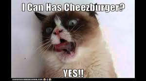 Grumpy Cat Coma Meme - grumpy cat coma meme 2015 here we come cats vs cancer grumpy cat