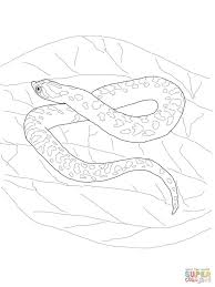 hognose snake download coloring page animal photos of
