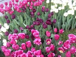 melbourne international flower and garden show u2013 makecookgrow com