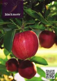 Blackmoor Fruit Trees - iita guidebook of common plants by iita forest project issuu