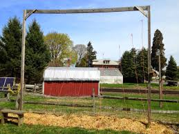 domegrowing how i built my hops trellis