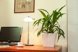 best plant for desk desk plants osborne plant service