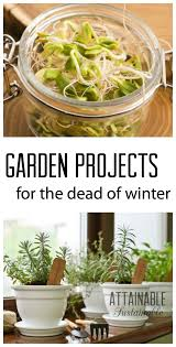 winter garden projects to tackle during the short cold days