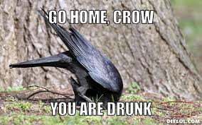 Crow Meme - go home crow you are drunk the corvid blog