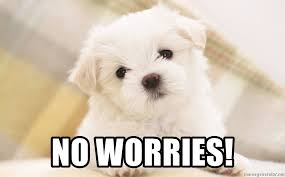 Cute No Meme - no worries cute white dog meme generator