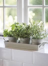 3 pots on tray clay my garden ideas pinterest herbs trays