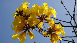 native plants in brazil what is the national flower of brazil reference com