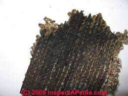 Harding Carpets by Carpet Mold Contamination Test How To Find And Test For Moldy