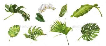 Tropical Plants Images - tropical plants set by purple bird graphicriver