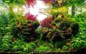Aquascape Com Planted Tank Happy Journey By Adil Chaouki Aquarium Design
