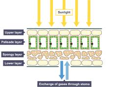 bbc bitesize gcse biology excretion in plants and animals