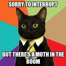 Moth Meme - business cat sorry to interrupt but there s a moth in the room