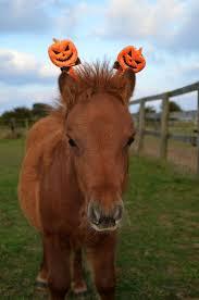 Halloween Costumes Horse 27 Equestrian Halloween Images Horses Happy