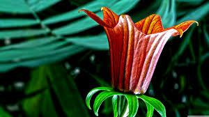 Botanical Garden Definition by Botanical Garden Flower Hd Desktop Wallpaper Widescreen High