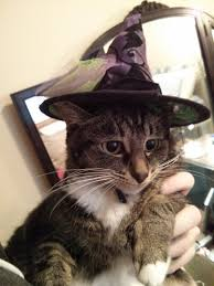 witch costume for cats halloween inlander staff cats in costume bloglander