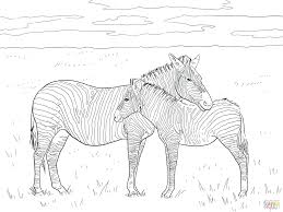 coloring pages marty zebra coloring pages free printable marty