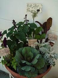 Herb Garden Winter - witch u0027s herb garden perfect for winter months witch hats