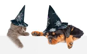 halloween kittens picture animals puppy kittens rottweiler dogs cats hat 3840x2400