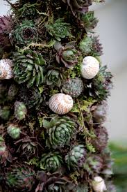 a living christmas tree tilly u0027s nest