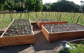 foods for long life start your fall and winter vegetable garden