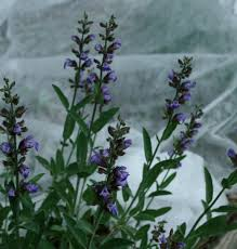 10 easy ways to protect plants from frost dengarden