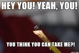 Mantis Meme - the napoleon complex mantis meme on imgur