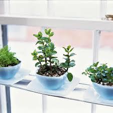 Indoor Container Gardening - indoor kitchen garden gardening ideas