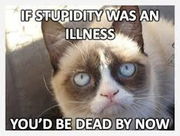 Frown Cat Meme - fluffy grumpy cat we know how to do it