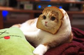 Cat Toast Meme - a sneaky cat who s got a real thing for french toast