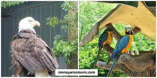 Busch Gardens Family Pass Busch Gardens Williamsburg Moneywise Moms