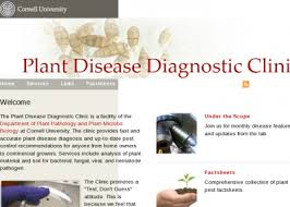 Plant Disease Diagnosis - cornell university u0027s plant disease diagnostic clinic plant