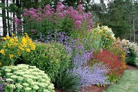 15 flower borders that sizzle petunias flower and gardens