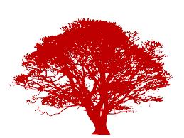 family tree fundraiser ends june 5