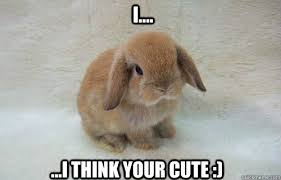Angry Bunny Meme - i i think your cute nihilist bunny quickmeme