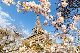 paris pictures cherry blossom and eiffel tower in paris at spring flickr