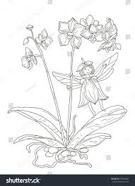 orchid flower fairy coloring page stock illustration 378750667