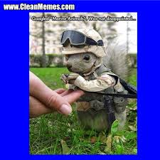 Clean Animal Memes - marine animals clean memes the best the most online