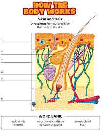 label parts of skin homeschool science biology pinterest