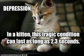 Happy Kitten Meme - how to tell if our kitten is happy way of cats blog