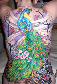 tattoo nightmares peacock cover up stunning fullback peacock tattoo design of tattoosdesign of tattoos