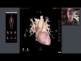 External Heart Anatomy External Heart Anatomy Youtube