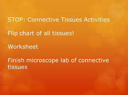 epithelial connective muscle and nervous tissues ppt download