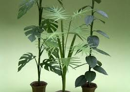 best plants for low light cool best house plants displaying ad for 5 seconds low light best