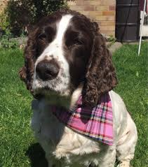 premium bandanas for dogs puppies cats in pink