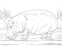 hippopotamus amphibius coloring page free printable coloring pages