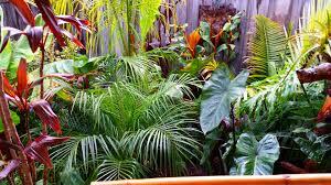 daniel u0027s tropical garden in australia fine gardening
