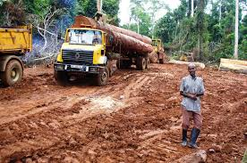 As demand for African timber soars  birds pay the ultimate price