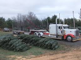 fontaine tree farms wholesale christmas trees in vermont